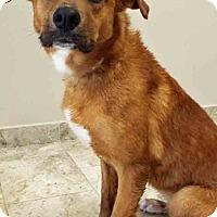 Adopt A Pet :: Bridgette - Channahon, IL