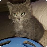 Adopt A Pet :: Byram - Colorado Springs, CO