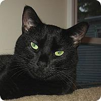 Adopt A Pet :: MIDNIGHT - 2013 - Hamilton, NJ
