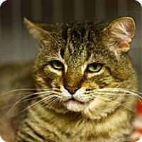 Adopt A Pet :: Tom Park - Lombard, IL