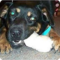 Adopt A Pet :: Mabel - Scottsdale, AZ