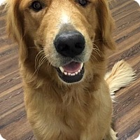 Adopt A Pet :: Emerson - New Canaan, CT