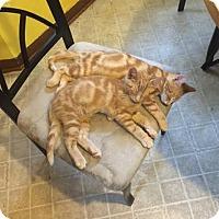 Adopt A Pet :: Rocky - McDonough, GA