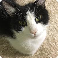Adopt A Pet :: Mercedes - Medina, OH