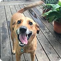 Adopt A Pet :: Mercy - Austin, TX
