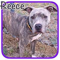 Adopt A Pet :: Reece - Ravenna, TX