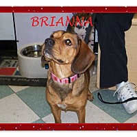 Adopt A Pet :: BRIANNA - Ventnor City, NJ