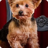 Adopt A Pet :: Cooper - Owensboro, KY