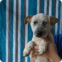 Adopt A Pet :: Ella - Oviedo, FL