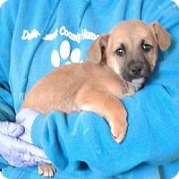 Adopt A Pet :: Kennedy - Ozone Park, NY