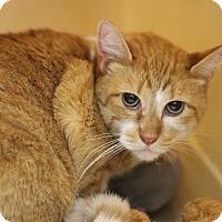 Adopt A Pet :: Butterball - Covington, LA