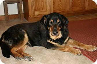 Shepherd (Unknown Type) Mix Dog for adoption in Avon, New York - Finn