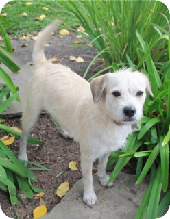 Terrier (Unknown Type, Small) Mix Dog for adoption in Norwalk, Connecticut - Suki - MEET HER