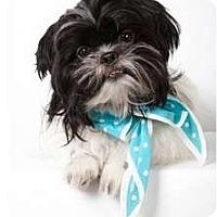 Adopt A Pet :: Beauregarde - New York, NY