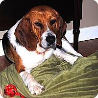 Adopt A Pet :: Carlton - Cookeville, TN