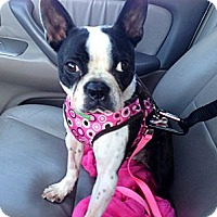 Adopt A Pet :: Chanel - Temecula, CA