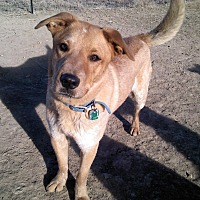 Adopt A Pet :: MAVERICK - Littleton, CO
