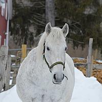 Adopt A Pet :: Tuskers - Washington, CT