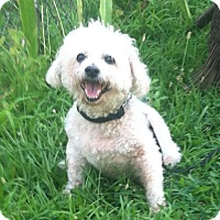 Adopt A Pet :: Eddie - Bridgewater, NJ