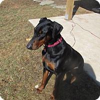 Adopt A Pet :: Emma - Sinking Spring, PA