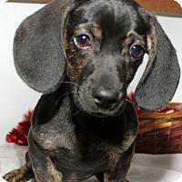 Adopt A Pet :: Rex - Erwin, TN