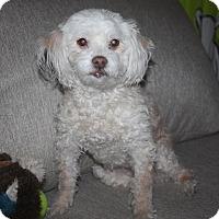 Adopt A Pet :: Sally - Henderson, NV