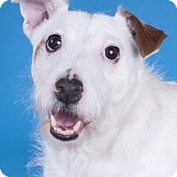 Adopt A Pet :: Yadi - Chicago, IL