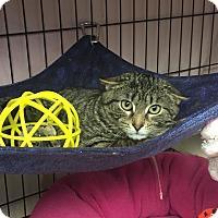 Adopt A Pet :: Lee - Lunenburg, MA