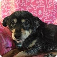 Adopt A Pet :: Missy - Iroquois, IL
