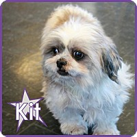 Adopt A Pet :: Kit - Excelsior, MN