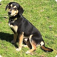 Adopt A Pet :: Yates - Manchester, NH