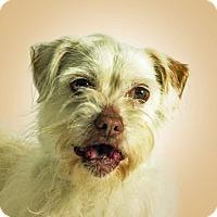 Adopt A Pet :: Paco - Prescott, AZ