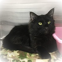 Adopt A Pet :: Thailand - Webster, MA