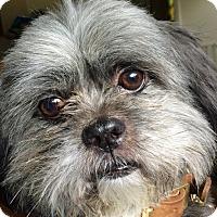 Adopt A Pet :: Louie - Chesterfield, MO
