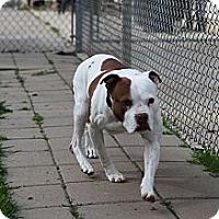 Adopt A Pet :: Patches - Lake Odessa, MI