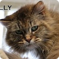 Adopt A Pet :: Jellie>^.,.^< $35 adoption - Union Lake, MI