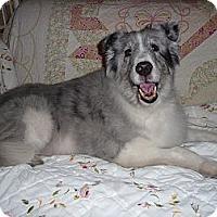 Adopt A Pet :: Smiling Jack - San Diego, CA