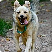 Adopt A Pet :: Teddy Ruxpin - Hastings, NY