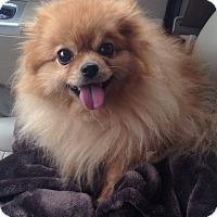 Adopt A Pet :: Tinkerbell - Hazard, KY
