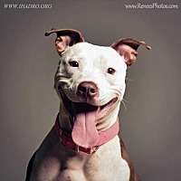 Adopt A Pet :: Lollie - Blacklick, OH