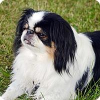 Adopt A Pet :: Charlie - Aurora, CO