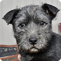 Adopt A Pet :: Ethan - Meridian, ID