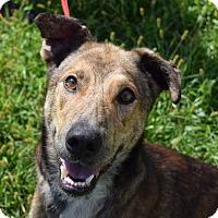Adopt A Pet :: Buddy Collins- URGENT - Lisbon, OH