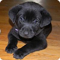 Adopt A Pet :: Mia - Millersville, MD
