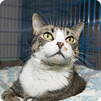Adopt A Pet :: Tammy - New York, NY