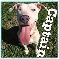 Adopt A Pet :: Captain - Royse City, TX