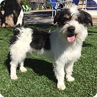 Adopt A Pet :: wiley - Temecula, CA