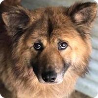 Adopt A Pet :: Zeppelin - Douglasville, GA