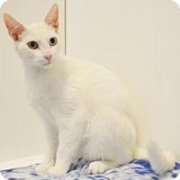 Adopt A Pet :: A711872 - Sacramento, CA