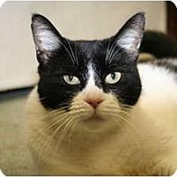 Adopt A Pet :: Mae Mae - Naples, FL